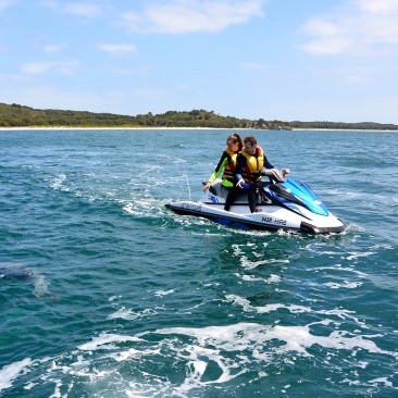 Jet Ski Tours Perth Dolphin close encounter