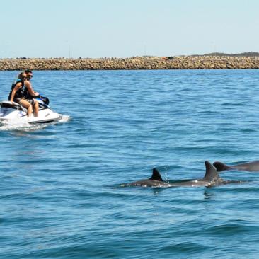 jetski tours perth ... more dolphins